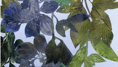 Marcela Marcuzzi. Flora (detail), 2015. Print from leaves Chine Colle' on paper - 59 x 21 inches.